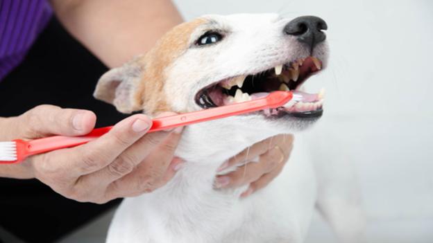 dog dental hygiene tips from phillips creek veterinary hospital in frisco texas